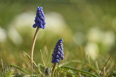 Makro Plants, Photography, Fotografie, Fotografia, Plant, Photograph, Planting, Planets