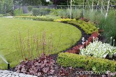 Ogród z lustrem - strona 231 - Forum ogrodnicze - Ogrodowisko