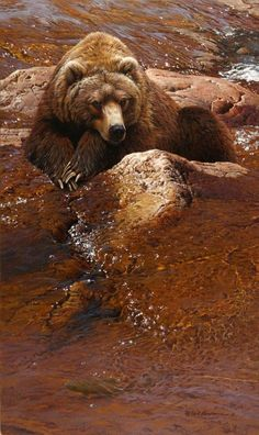 Rod Lawrence Just Chillin 2016 Acrylic x cm Animal Categories, Native American Paintings, Bear Art, Old Master, Wildlife Art, Brown Bear, Victorious, Salons, Sculptures
