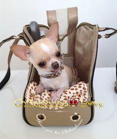 bolsos para perros chihuahua
