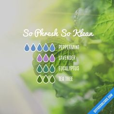 Blend Recipe: 5 drops Peppermint, 3 drops Lavender, 3 drops Eucalyptus, 3 drops Tea Tree