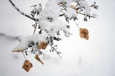 © crucifix marielle #flower#snow#winter#frost#white