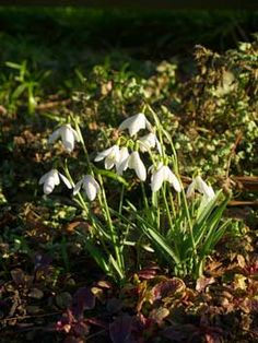 Four Fantastic Early-Blooming Bulbs for Permaculture Gardens...great new article out today from growveg.com