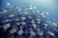 World of Rays Photo by Eduardo Lopez Negrete -- National Geographic Your Shot