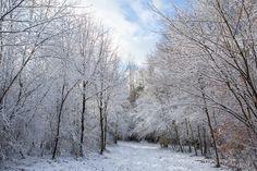 Forêt de Sécheval © Thierry MICHEL #Ardennes #France