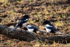 Zdjęcie numer 3 w galerii - Jak zostać miejskim ornitologiem. Za oknem ptaków jest więcej niż w puszczy