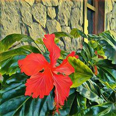 flores do meu jardim: hibisco