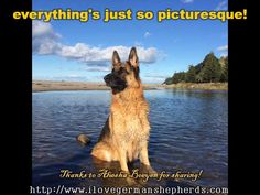 Keeping Your German Shepherd From Drinking  Seawater---  Additional GSD  Images and  Details
