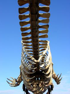whale skeleton... cool perspective
