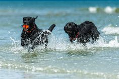Playful Labs by Gord Rufh on 500px