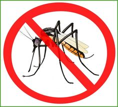 While many health departments have made mosquito-control efforts, such as aerial and ground spraying, people are encouraged to protect themselves from mosquito bites using basic techniques. Mosquito Control, Surviving In The Wild, Mosquito Killer, Pest Control Services, Health Department, Mosquitoes, Vegetable Garden, Division, Gardens