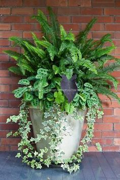 Ivy, ferns and other tropical plants in a tall white stone pot against a red brick wall. by Knittin4britain