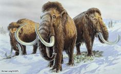 Art illustration - prehistoric mammals - mammoths: the extinct genus Mammuthus had long, curved tusks. The northern species commonly had long hair, also. They lived from the Pleistocene, about 5 million years ago, to the Holocene, 4500 years ago. These creatures lived in Europe, Asia, Africa and North.