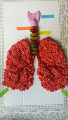 We love this sweet, edible model of the lungs! We love this sweet, edible model of the lungs! Elementary Science, Middle School Science, Science Classroom, Teaching Science, Science Activities, Life Science, Human Body Science, Human Body Activities, Human Body Unit