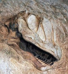 Camarasaurus skull in wall of Dinosaur Quarry, Dinosaur National Monument, Utah. USGS photo Camarasaurus skull in wall of Dinosaur Quarry, Dinosaur National Monument, Utah.