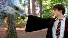 harrybuckbeack