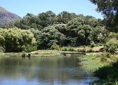 With summer drawing to a close, outdoor swims in nature are a rare treat. We've rounded up our favourite reservoirs for swimming in the Cape. White Settlers, Summer Drawings, The Province, Nature Reserve, Cape Town, South Africa, Places To Visit, Swimming, Rivers