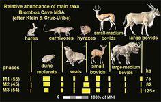 Blombos Cave fauna