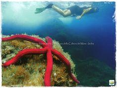 Stella serpente e snorkeling ischia
