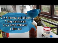 House Plants, Mugs, Youtube, Wordpress, Gardening, Plants, Balcony, Home Plants, Cups