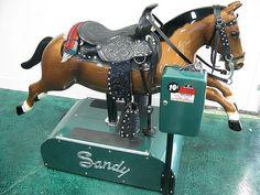 Sandy the wonder horse