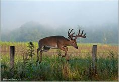 Cades Cove - been there & saw bears, but not any deer.