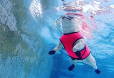 All Dogs Can Doggy Paddle, But Some Breeds Just Aren't Natural Swimmers