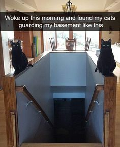Cats are awesome, and super funny too! Who doesn't like cats and kittens? They make us laugh and happy! Humor Animal, Funny Animal Jokes, Funny Animal Pictures, Cute Funny Animals, Stupid Funny Memes, Animal Memes, Cute Baby Animals, Funny Cute, Cute Cats