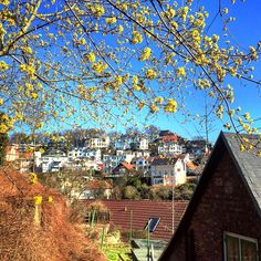 5 Hamburg-Tipps in Blankenese by Typisch Hamburch