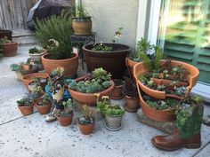 A little corner of succulents in our yard.