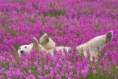 Purple flowers, white bear.