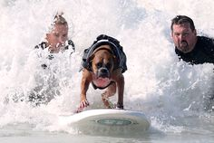 Hanzo, a 4-year-old German boxer, catches a wave during the annual Surf City Surf Dog competition at Huntington Beach in California on September 30, 2012. (Joe Klamar/AFP/GettyImages) #