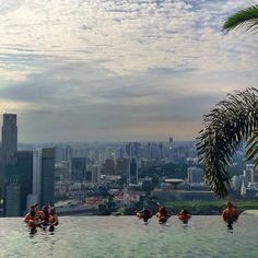 ENG - You need to be a guest to dive into the amazing infinity pool of the Marina Bay Sands but I was lucky enough to visit and enjoy the stunning views!  FR - Il faut résider à l'hôtel pour profiter de cette splendide piscine infinie du Marina Bay Sands mais j'ai eu la chance de visiter les lieux et admirer la vue. Définitivement un hôtel de rêve!