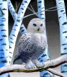 Baby Snowy Owl | Snowy Owls