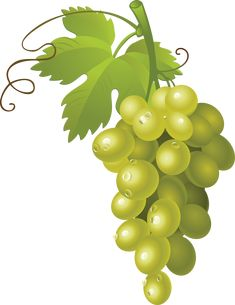 Bing Images Free Clip Art Many Interesting Cliparts - Clip Art Library Green Fruit, Green Grapes, Apple Classroom, Classroom Decor, Food Png, Fruit Clipart, Clip Art Library, Purple Balloons, Fruits Photos