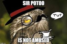 Image result for potoo