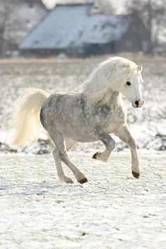 So pretty. Looks like a real life Breyer pony. :)