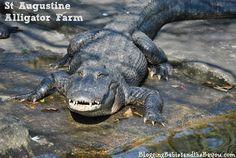 St. Augustine, Florida Family Travel - St Augustine Alligator Farm BayouTravel