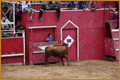 Santacara: Vacas Hermanos Arriazu  en Santacara Año 2019 Goats, Cow, Animals, Youth, Cows, Siblings, September, Animales, Animaux