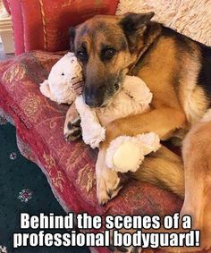 awwwww! He looks so worried that someone is going to take his bear away. ==> visit http://www.amazingdogtales.com/gifts-for-german-shepherd-lovers/ for cool gifts for GSD lovers