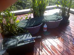 Garden Maintenance, Irrigation, Garden Landscaping, Pond, Garden Design, Fish, Landscape, Plants, Front Yard Landscaping