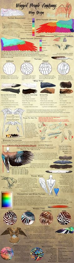 Winged People Anatomy: Wing Design by Blue-Hearts: