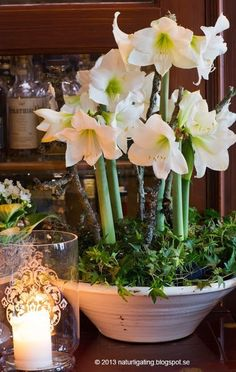 amaryllis is a classic winter flower. These beautiful, huge blooms come in red, white, peach and pink. Lovely, romantic flowers that are perfect for a winter wedding in January and reliably available. seasonal wedding flowers. #beautifulflowersromantic