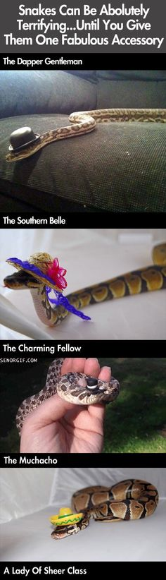 Snakes with hats. --Omg! The boa with the Steampunk hat!!!! Bwahaha!