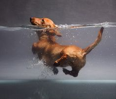 Doxie paddle : )