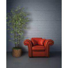 Poster of Red leather armchair, Architecture Posters, Best Photo Background, Blue Background Images, Background For Photography, City Photography, Poltrona Vintage, Place Rouge, Buy Sofa, Potted Trees, Palm Trees