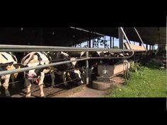 All About Cows! A Dairy Farm Close-Up - 8:44 - start it at 53 seconds