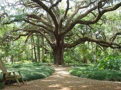 A walk in the park, washington oaks state park, palm coast FL