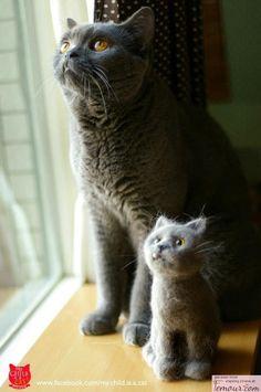 mini-me and me