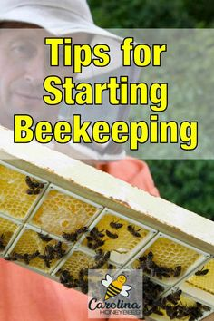 How to Start Beekeeping - Tips to consider when you are considering starting beekeeping. How To Start Beekeeping, Beekeeping For Beginners, Bee Facts, Bee Swarm, Bee Honeycomb, Backyard Beekeeping, Save The Bees, How To Keep Bees, Worm Farm
